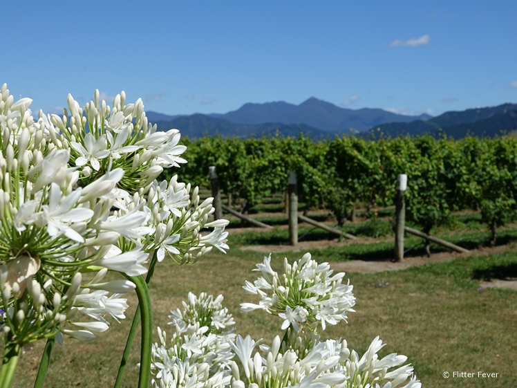 Allan Scott vineyards Marlborough
