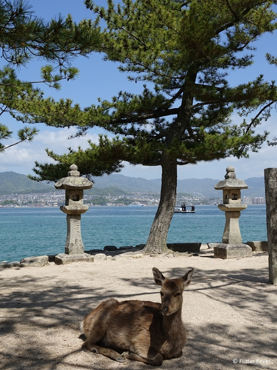 Chilling deer at Miyajima Island