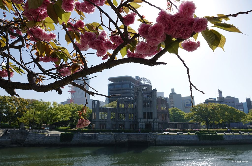 Contrast of A-Bomb Dome behind blossom, seen from across the Motoyasu River
