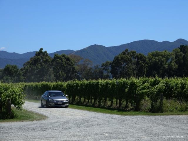 Driving around the vineyards in Blenheim