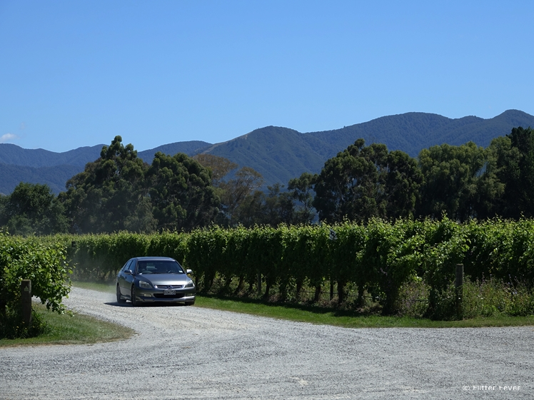 Driving around the vineyards in Blenheim