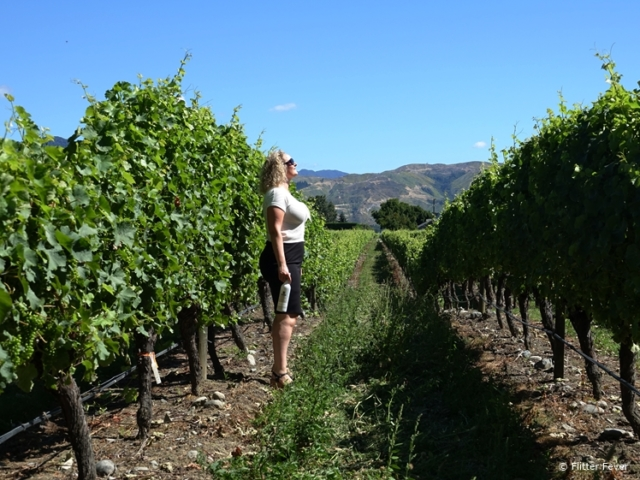 In the vineyard with a bottle of Giesen wine