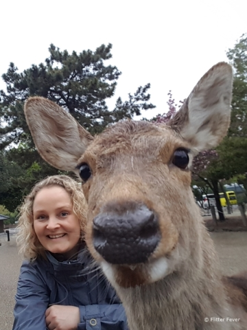A curious deer in front of my camera in Nara