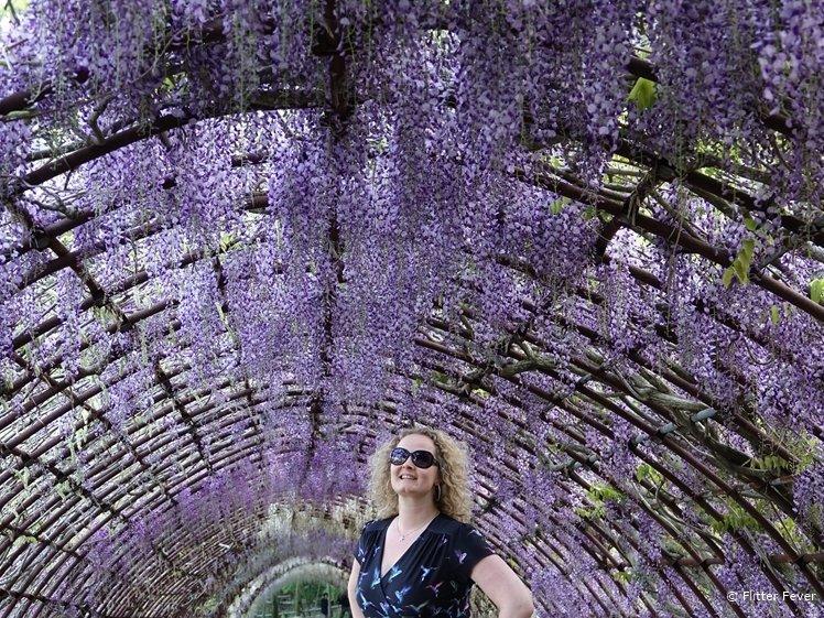 Wisteria Garden in Fukuoka Japan