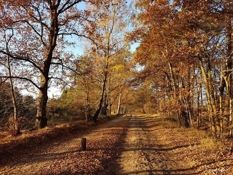 Autumn colors in Buurserzand near Enschede, Twente