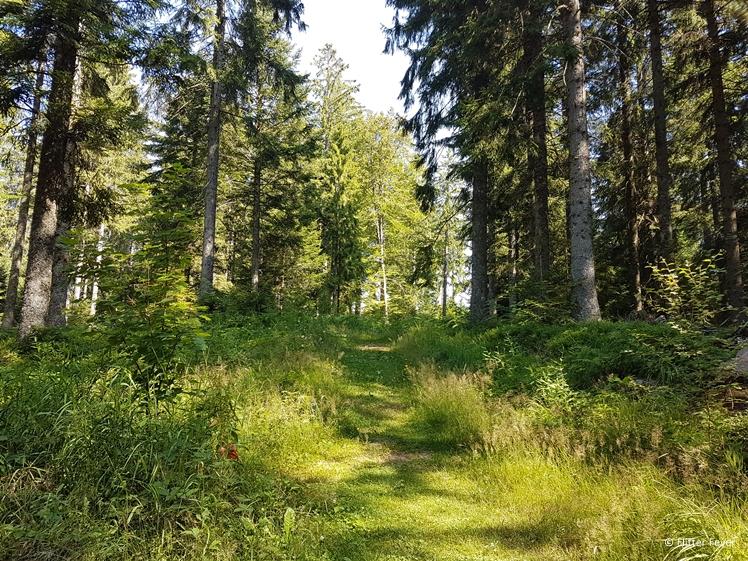 Klostersteig Kniebis walk towards Karsee view point