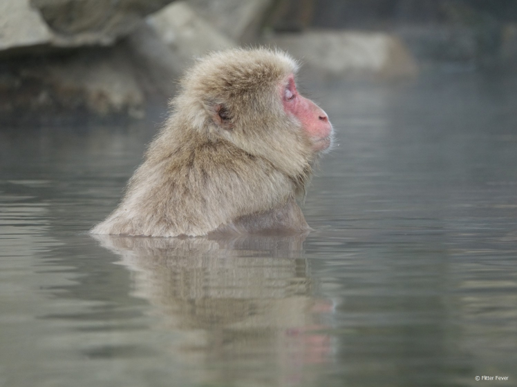 Monkey enjoying the hot water at Jigokudani Yaen-koen Snow Monkey Park Japan