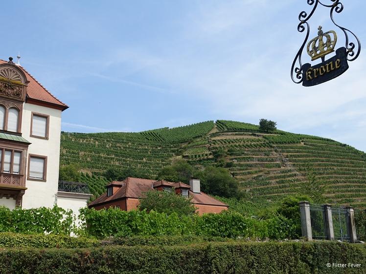 Vineyards opposite Baden-Bandener winery in Baden Baden