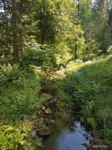 Water stream at Klostersteug Kniebis walking path