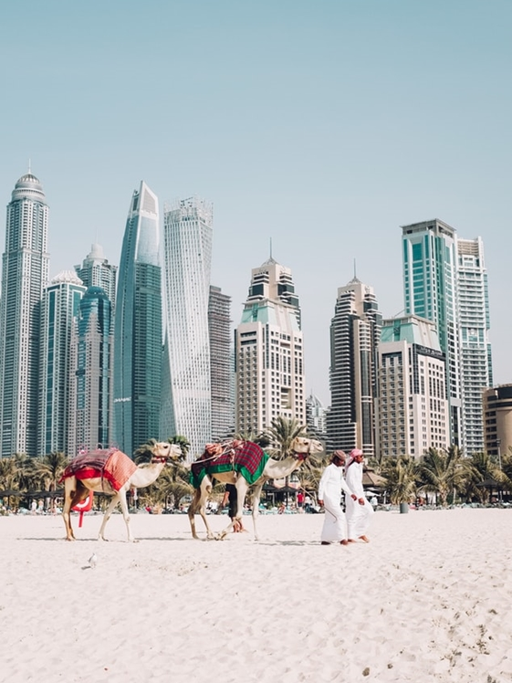 Camels and Arabs on the beach in Dubai