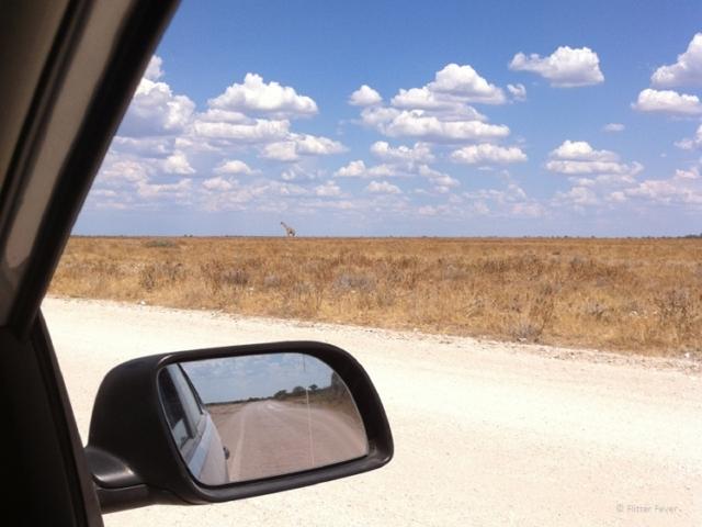Giraffe seen from the car Etosha NP Namibia