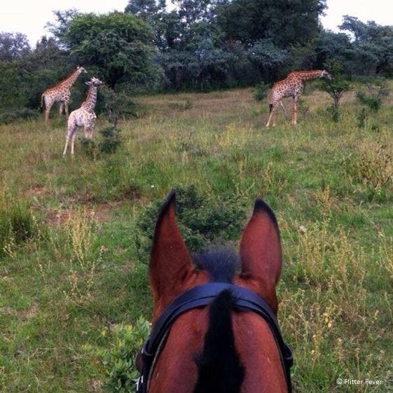 Horse riding safari at Ants Hill