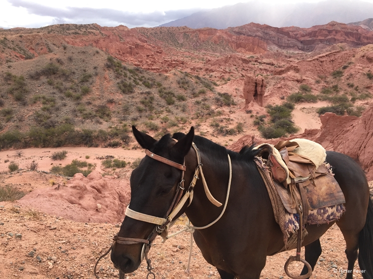 Quebrada de las Conchas view and my horse for the day