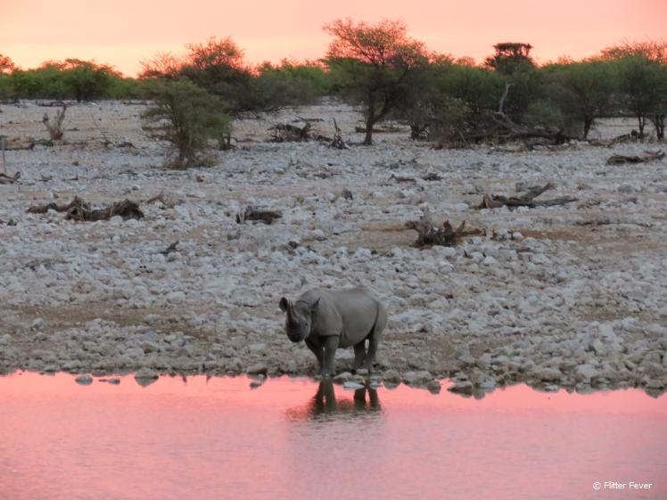 Rhino at sunset Etosha National park Namibia