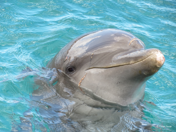 Such a cutie this dolphin