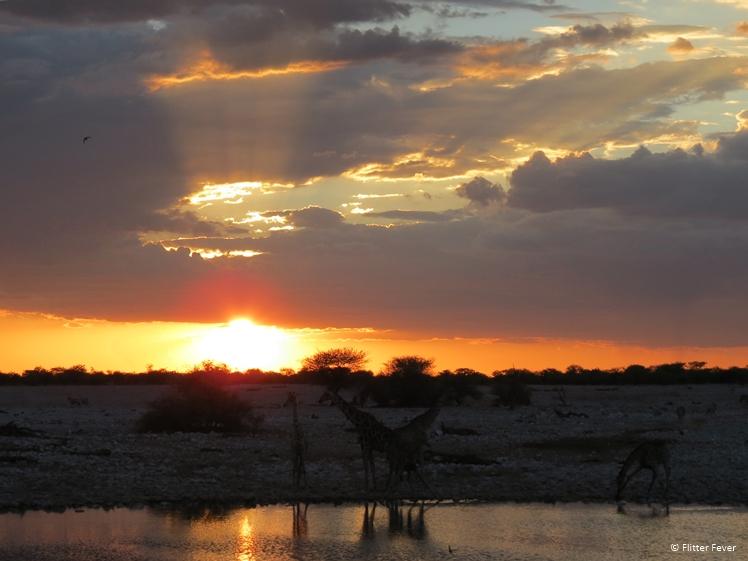 Wildlife at Okaukeujo waterhole Etosha NP sunset
