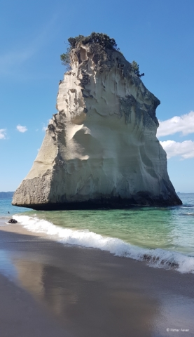 Rock in the water at Cathedral Cove beach Coromandel Peninsula