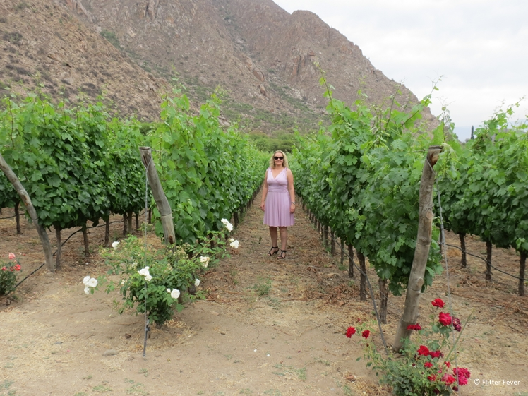 Woman in pink dress in a vineyard of Finca Las Nubes Jose L. Mounier in Cafayate Salta province Argentina