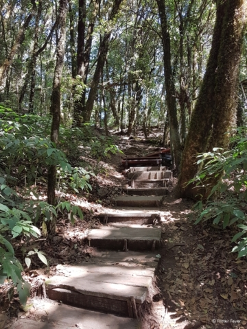 The only way is up at Kew Mae Pan Nature Trail Doi Inthanon National Park Chiang Mai