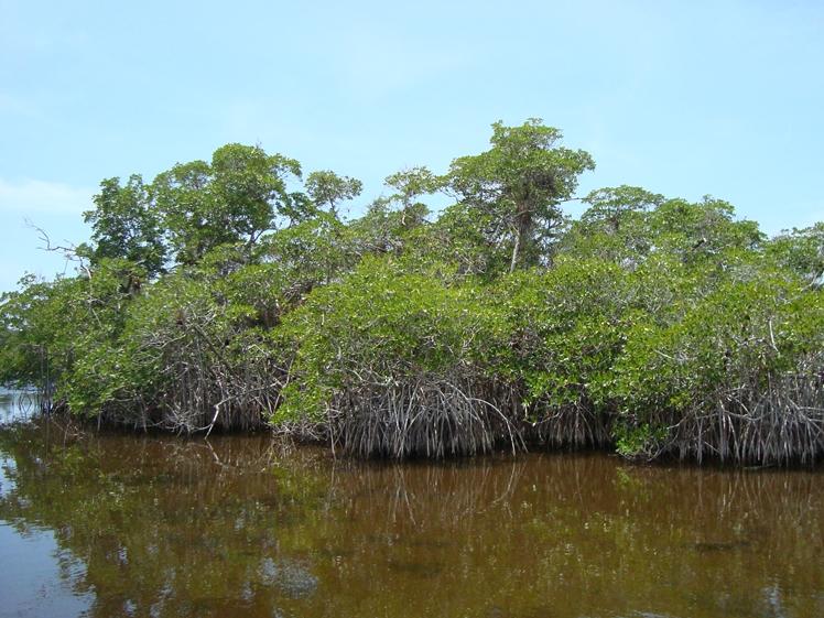 Swamp of Everglades National Park Florida