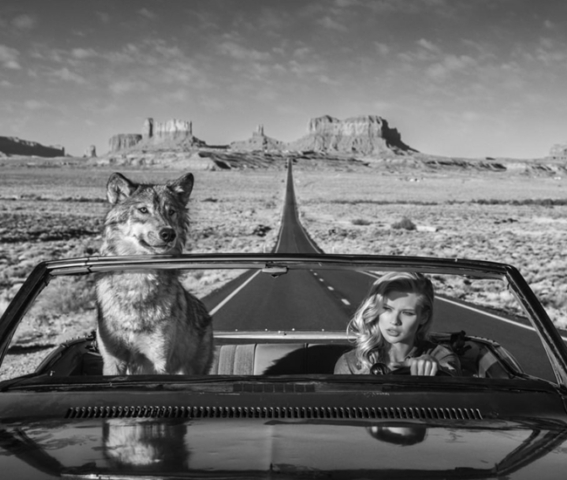 Wolf Lady Car David Yarrow