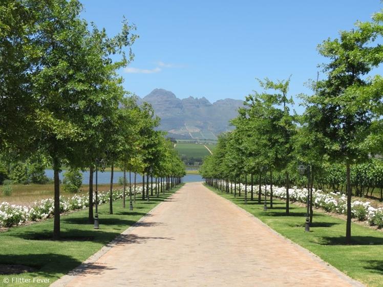Drive way of Asara Wine Estate Hotel in Stellenbosch