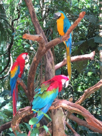 Three parrots hanging out together at Parques das Aves Iguazu Falls
