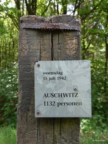 Beam Westerbork Auschwitz 15 July 1942