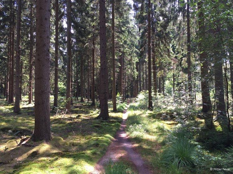 Gieten Borger Forest near Eext Drentsche Aa