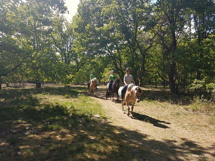 Horse riding at Zeegser dunes in Drenthe