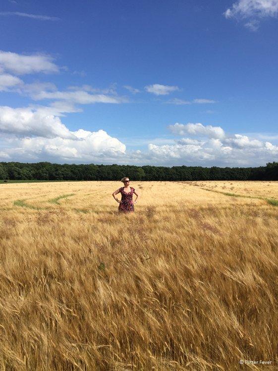 In a wheat field in Eext Drentsche Aa