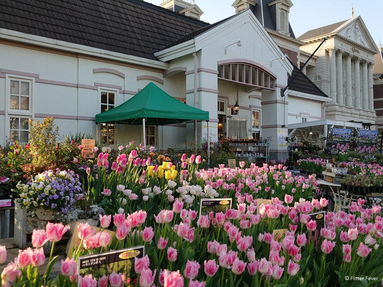 Tulips for sale Huis ten Bosch Japan