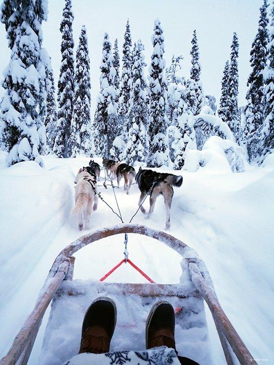 Husky ride in Finnish Lapland