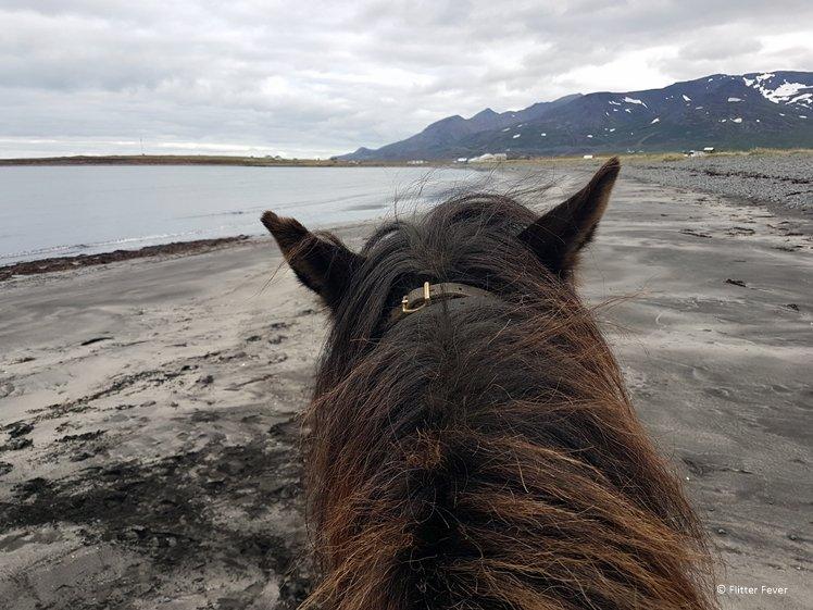 Riding on the black beach near Langhus Farm with Askur