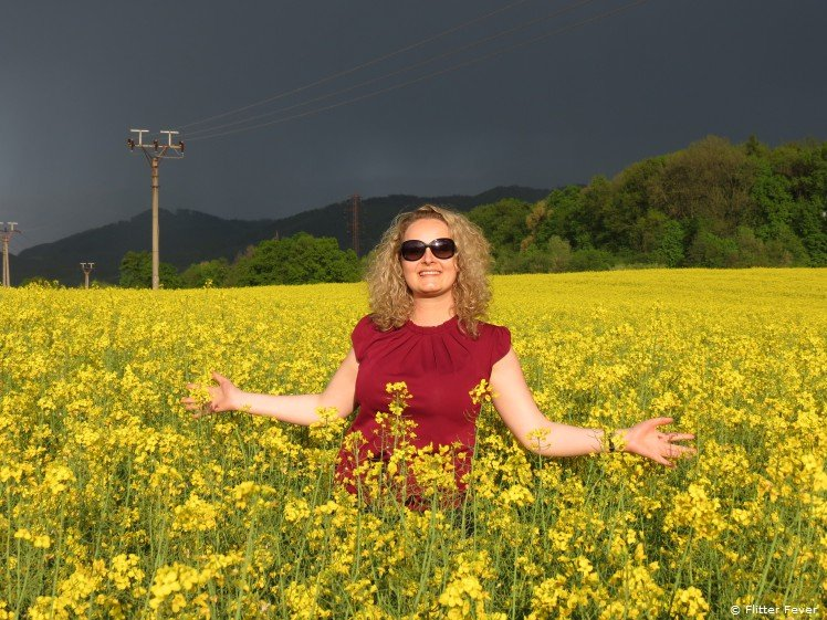Yellow rapeseed field in eastern Czech Republic