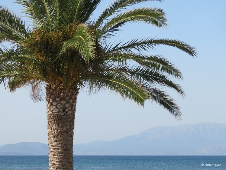 Palm tree sea and mountains Turkish Aegean Coast