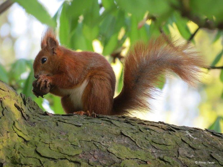 Cute squirrel in Lazienki Park Warsaw