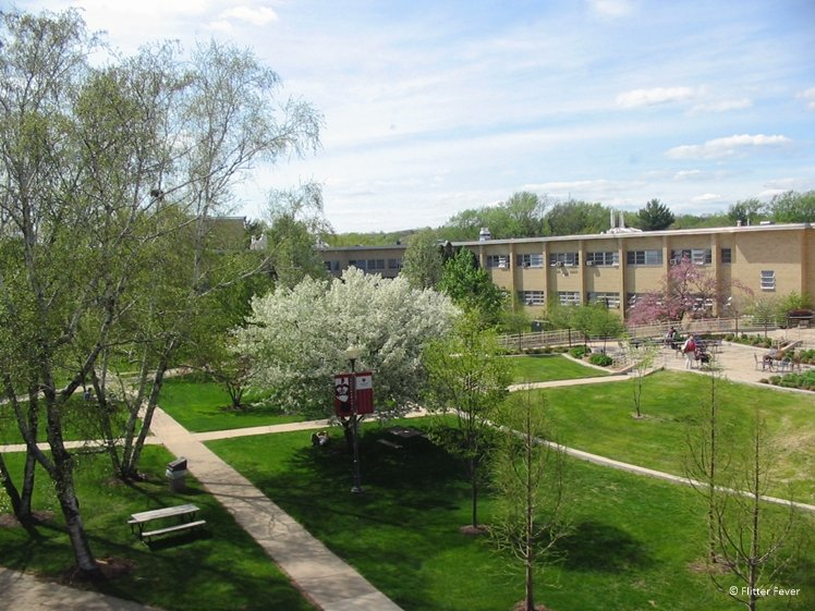 Blossom trees at Edgewood College Madison