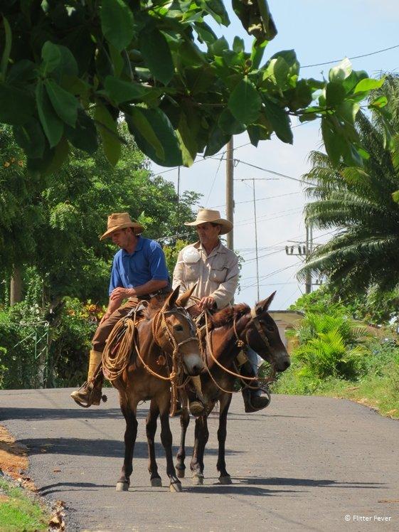 Cowboys on horses in Vinales Cuba