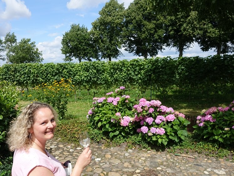 Woman enjoying a glass of wine while sitting in a Dutch vineyard