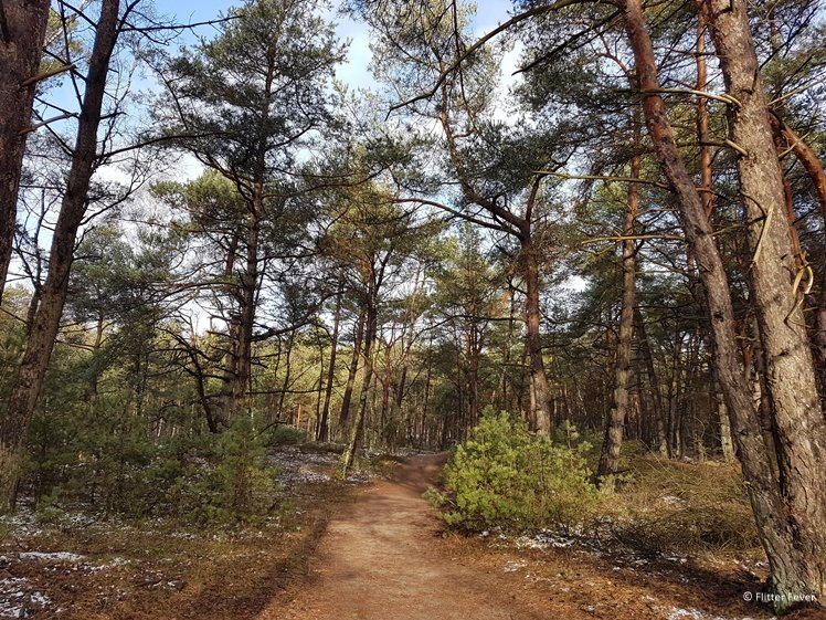 Nice sunny forest path near NP Hoge Veluwe
