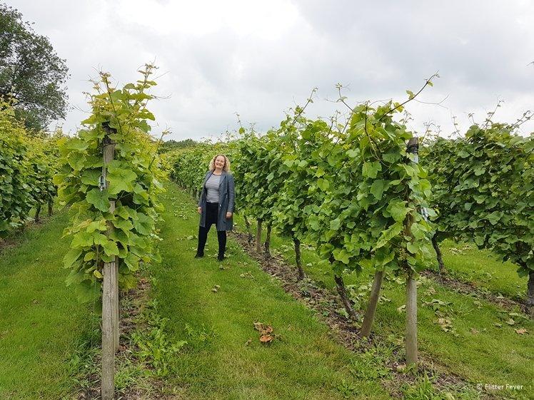 Op bezoek bij Wijndomein De Koen in Zuid Scharwoude Nederlandse wijngaard