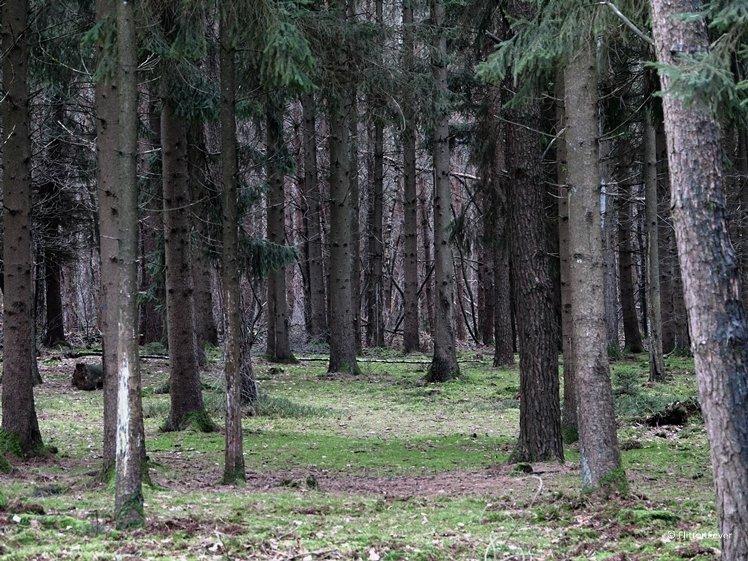 Roekelse Bos