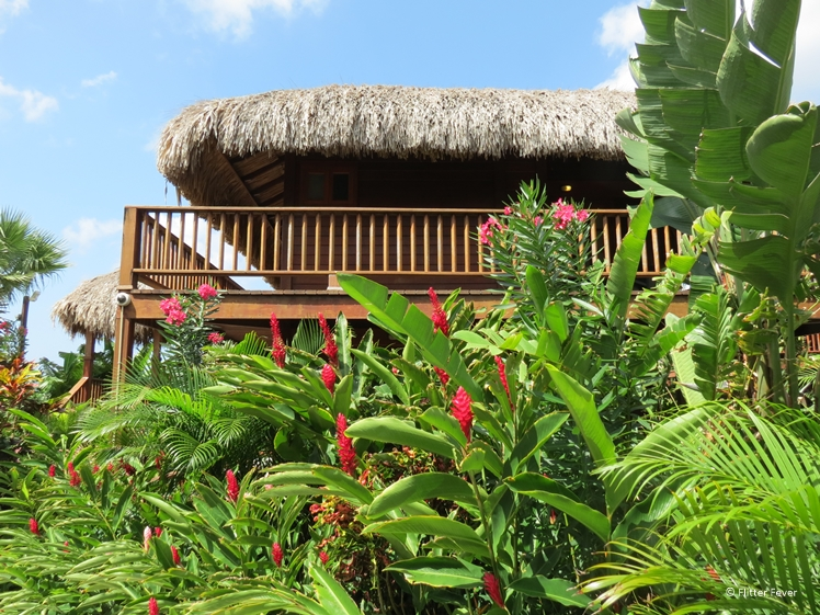 The tropical plants at Kontiki Beach Resort Curacao