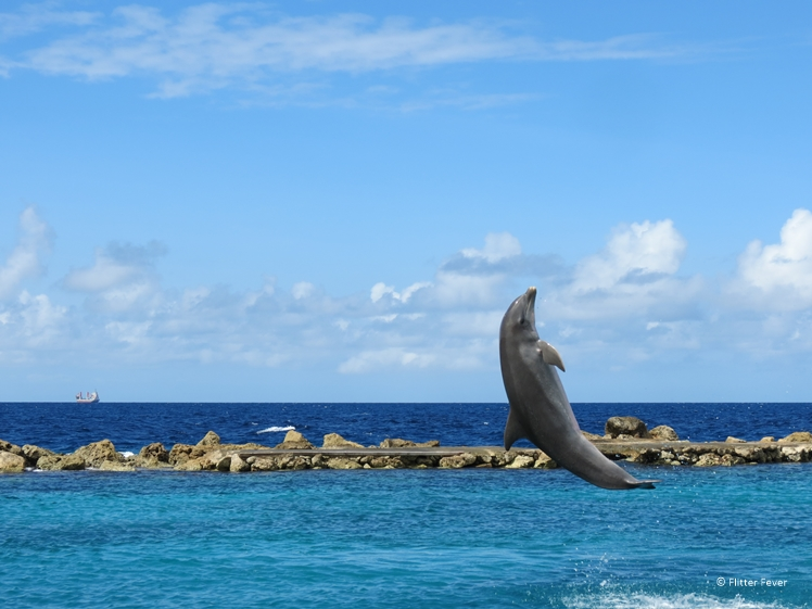 Dolphin jumps out of the water at the Zee Aquarium Curacao
