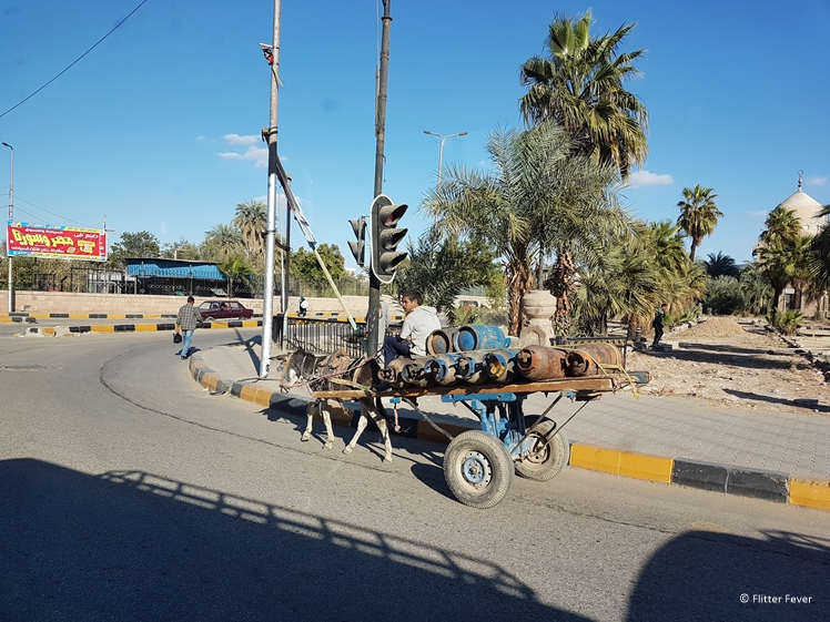 Donkey carrying a heavy trailer in Aswan South Egypt