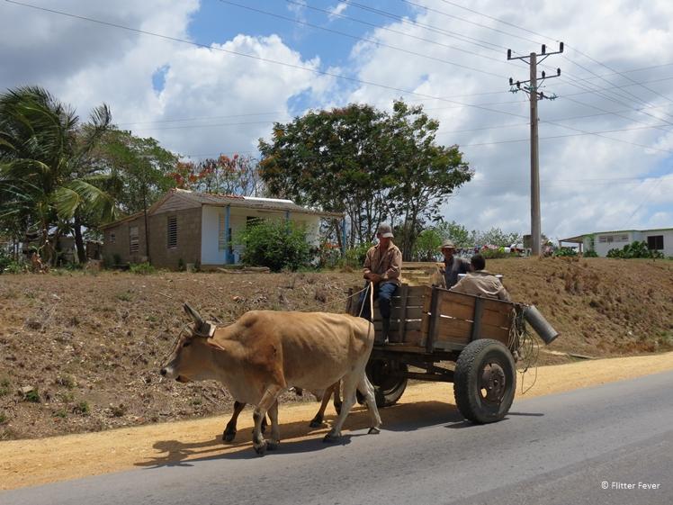 Ossenkar onderweg op Cuba