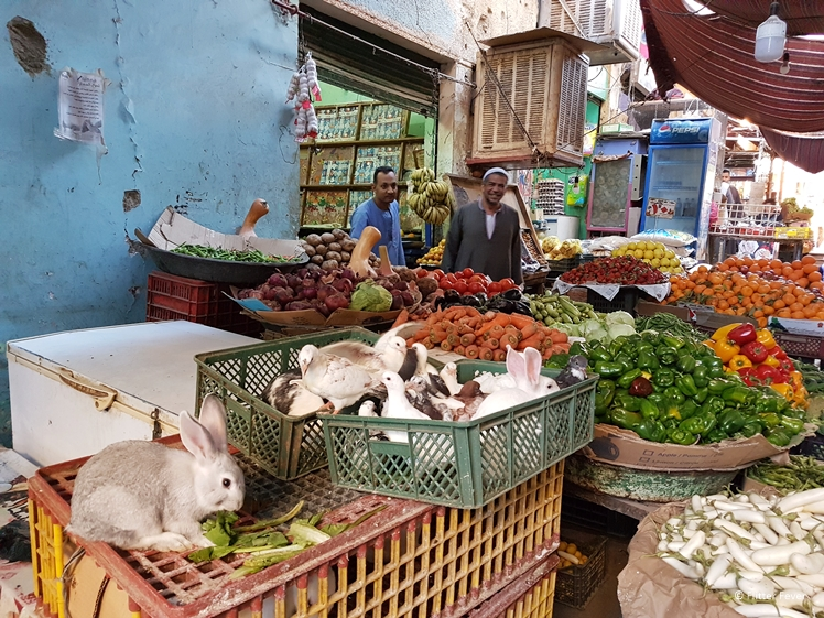 Rabbits, pigeons and veggies for sale at Aswan Market souk