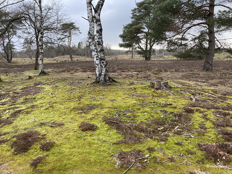 Bakkeveense dunes moss