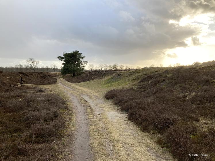 Bakkeveense dunes - walking between the heath